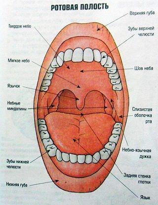 Які таблетки від болю в горлі вибрати?