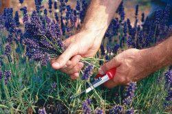 Збір трав для лікування нирок