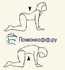 комплекс вправ при грижі хребта