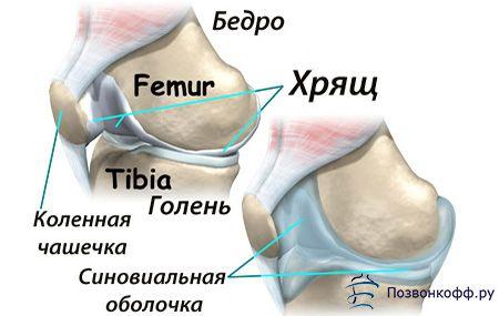 Починайте лікування синовіту колінного суглоба негайно!