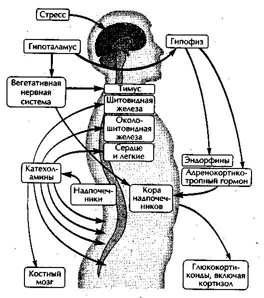 Вплив стресу на психічну діяльність людини в складних умовах. Процес формування стресу.